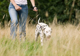 Did you know, people who walk their dog 20 minutes a day lose more weight?